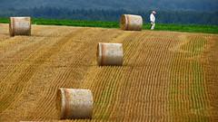 Strength lies in calmness (RainerSchuetz) Tags: retiree pensioner agriculture field stubblefield baleofstraw rentner harvest explore explored