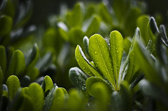 (::: M @ X :::) Tags: drops rain plantas plants herbage green verde