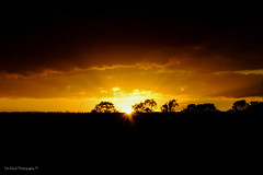 DSC_0179 (timmie_winch) Tags: nikon nikond3000 d3000 august august2016 2016 sun sunset sunsetsuffolk sunsetoversuffolkcountryside sunsetovercornfields sunsetovercornfield silhouette 18105mm 18105vr nikon18105mmvrlens shadows golden goldenhour goldenlight elliedunn ellie eleanordunn ells eleanor ellsdunn dunn landscape landscapephotography landscapephotographer naturephotographer naturephotography nature timwinchphotography tim timwinch winch debenham ip14 suffolk