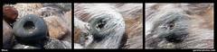 Wave (gardnerphotos.com) Tags: crisppointlighthouse up upperpeninsulaofmichigan lakesuperior greatlakes gardnerphotoscom