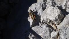 IMG_0474 copy (Bojan Marui) Tags: lepena velika baba velikababa krnskojezero