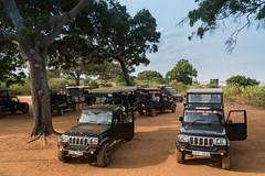 Safari im Yala Nationalpark Sri Lanka