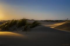 Late Afternoon Light (dipphotos) Tags: sunlight netherlands beach afternoon dunes zeeland dipphotos sunset seascape
