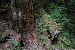 patriarchs_009 (Sascha G Photography) Tags: washingtonstate nikon d7200 roadtrip august summer hike hiking nature landscape scenery lake mountains mountrainier rainier nationalpark grove trees