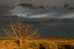 the burning tree (zora_schaf) Tags: theburningtree utah zoraschaf highway fire tree landschaft landscape unitedstates usa thefiretree