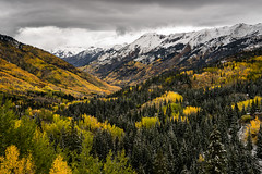Red Mountain Pass in Gold and Green (Kurt Lawson) Tags: abrams abramsmountain aspen aspens clouds colorado copyrighted dusting evergreen forest mountain mountains pass pine quaking range red rockies rocky sanjuan snow valley ridgway unitedstates