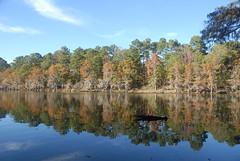 Bayou Reflection (Bea Hive) Tags: trees usa reflection fall texas bayou cypresstrees uncertain caddolakestpark