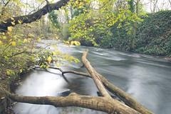 Glass Autumn Stream (gordon.milligan) Tags: autumn trees water nikon monifieth nd8 neutraldensity d80 longcapture