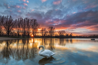 swan in the sunset (buga kassel)