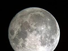 Digiscoped full moon (Mickut) Tags: moon digiscoping lumia scopos komakallio cpc1100 lumia1020