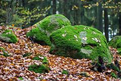 autumn stone forest leaf nationalpark moss woods skog sten höst mossa löv söderåsen klåveröd