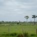 Fazendas de gado