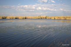 Moremi, Okavango Delta (Zsuzsa Poór) Tags: africa nature animal wildlife safari botswana moremi animalplanet okavango okavangodelta wildlifeafrica canonef2470mmf28 canonistas canoneos7d canonef70200mmf28lisusmii