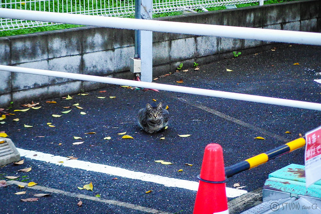 Today's Cat@2014-11-27