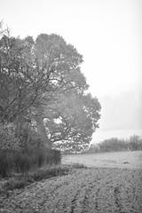 Foggy Whiteleaf (IFM Photographic) Tags: blackandwhite bw ex monochrome canon buckinghamshire sigma os princes bucks f28 dg whiteleaf 70200mm risborough princesrisborough 600d hsm sigma70200mm whiteleafcross img5749a sigma70200mmf28exdgoshsm