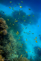 DSC02708.jpg (Raul Wong Roa) Tags: life travel marine underwater australia queensland snorkelling cairns reef greatbarrierreef corals oceania