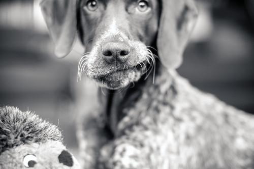 Piper's Goofy Puppy Face (2721)
