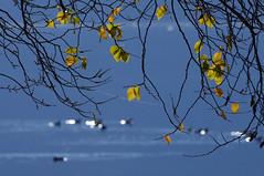 Glück (eulenbilder) Tags: see licht wasser wintertag sonne strandgut millstättersee wintersonne lichtpunkte eulenbilder letzteslaub