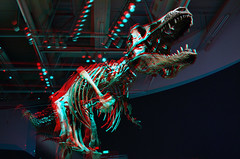 T-Rex-3D-02-Anaglyph-(red-cyan-glasses-required) (Aaron & Radhika) Tags: camera new old red eye art monster museum photoshop t skeleton fossil skull design three photo stereoscopic 3d big scary nikon artist photographer cross post dinosaur designer reptile space teeth year aaron captured cyan optical anaglyph sharp lizard stereo zealand illusion photograph adobe wellington million bones papa spatial years te eyed dslr rex effect processed depth 67 trex fossils carnivore tyrannosaurus dimensions dimensional cs5 openshaw d3100