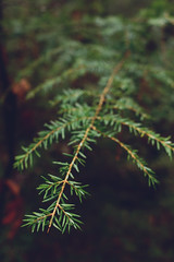 (TylerMurrayPhotography) Tags: plant macro tree green water pine forest georgia droplets woods sony fine sigma sonya65