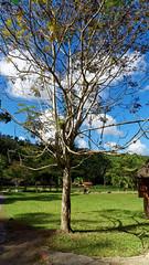 2014-12-06_12-07-11_ILCE-6000_1613_DxO (miguel.discart) Tags: voyage cuba dxo vacance visite 2014 editedphoto createdbydxo