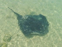 Stingray (mikecogh) Tags: shadow dark stingray wide inverloch shallows