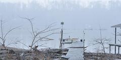 NOT White Noise! (BKHagar *Kim*) Tags: white snow river al dock alabama athens snowfall elkriver bkhagar
