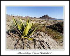 Playa de los Genoveses, Parque Natural Cabo de Gata - Nijar, Almería, Spain (Jequiles) Tags: olympus omdem5 zuiko 714 wide zd714 714mm ultrawide genoveses almeria sanjose playa beach cactus pita em5 landscape seascape sand em5zuiko714 7mm zd 14mmequivalent f4 714mmf4 a379