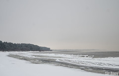 Beach (Sir, Rony) Tags: trees winter sea sky snow cold tree green ice beach water beautiful beauty forest snowflakes waves place wind visit it balticsea baltic best latvia let balticstates jurmala latvians jrmala jaunkemeri visitlatvia jaunemeri visitriga visitjurmala
