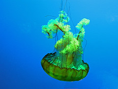 green animal aquarium marine jellyfish