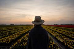 (CarolienCadoni..) Tags: sunset sky sun netherlands hat lines yellow photography sundown tulips nederland groningen uithuizermeeden sal2470z sonyslta99