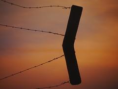 VerDronkenLand. (Warmoezenier) Tags: water sunrise zeeland land prikkeldraad oranje yerseke refelection paal moer zonsopkomst verdronken
