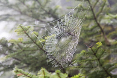 Spiderweb (dmitry.antipov) Tags: washington 6d 241054lis