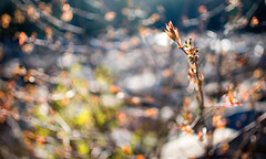 Along the Sawyer River (kmacgray) Tags: newhampshire portfolio 35mmf18 bokey natureycrap portfolionature