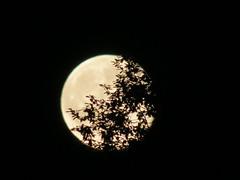 SPOOKY MOON (RON1EEY) Tags: sunset summer moon bike cat scotland jets fullmoon lunar sunray jettrails jetengines sunsetscotland moonrisemay