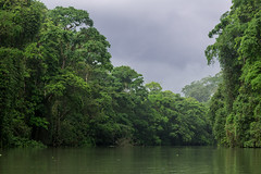 Green River (KarlsGalaxy) Tags: trees sky costa storm tree green nature water beauty rain canon river landscape cool costarica cloudy rica jungle 6d