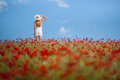 Poppy Day (migajiro) Tags: back dof sony espalda alpha pamela 900 poppys amapolas migajiro tercios sal135f18z ltytr1