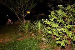 IMG_8648 (jalexartis) Tags: lighting nightphotography night yard dark landscape lights backyard landscaping shrub yucca shrubbery yuccaplant