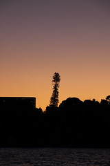 Twilight and the tree (Paul Threlfall) Tags: tree silhouette australia nsw sydneyharbour aftersunset