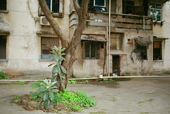 partially abandoned housing estate, Chongqing (whistle.and.run) Tags: china travel trees plants plant color colour tree travelling green abandoned film leaves analog 35mm leaf nikon chinese 35mmfilm cq analogue filmcamera  traveling chongqing derelict  nikonfm2 analogphotography modernarchitecture  35mmphotography filmgrain abandonedbuilding   filmphotography travelphotography chinesearchitecture  nikonfm colorfilm  nikon35mm derelictbuilding   35mmcamera chinesebuilding 35mmcolourfilm colourfilm  35mmcolorfilm filmnikon analoguephotography nikonfilmcamera    modernchinesearchitecture   35mm