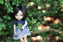 Ready for Summer (AluminumDryad) Tags: green nature leaves outdoors doll handmade sewing gingham bjd freckles resin etsy fairyland navyblue eyelet boxwood ante balljointeddoll dolldress dollclothes etsyshop pkf tinybjd pukifee trillianandcompany
