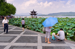 What's in the water - Hangzhou, China (Keystone Photography) Tags: china family blue mountains colour green tourism umbrella pagoda lotus westlake hangzhou lillies keystone recreation curious redbubble pentaxk5 repacholi