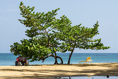 playa punta popy (bilderkombinat berlin) Tags: shadow sea tree beach daylight deckchair horizon playa quad republicadominicana lasterrenas nofilter caribe hispanola saman quisqueya puntapopy 2016
