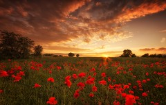Their Last Sunset (Captain Nikon) Tags: sunset sadness war sundown poppy poppies remembrance worldwar1 centenary battleofthesomme sigma1020mmf4 nikond7000