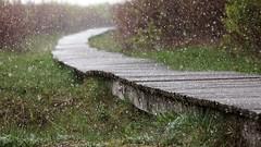 *** (pszcz9) Tags: polska poland przyroda nature deszcz rain wiosna spring parknarodowy nationalpark ścieżka path sony a77 beautifulearth
