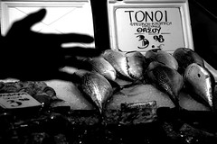 _DSC7207.ARW (Parrasgo) Tags: light fish streetart news cat plane hand market stadium athens meat greece pots mercado grecia atenas gato estadio pigs strike trucks olympic tuna chanel atun tono meteora delfos corinto epidauro mandolina