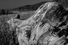 Driftwood (Pixi.St) Tags: wood bw macro scotland blackwhite driftwood holz isleofarran schottland macrophotography treibholz blackwaterfoot schwarzweis makrofotographie grosbritannienundnordirland