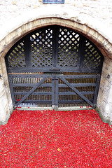 Poppies at The Tower (tad2106 - Trudie Davidson Photography) Tags: red london art anniversary installation poppy poppies worldwarone ww1 remembrance thetower thetoweroflondon poppyfield