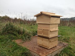 One of GlastonBees Warre Beehive with a colony of Honey Bees just moved in