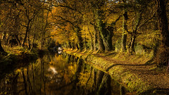 Autumnal (MatthewColman) Tags: uk autumn trees water leaves wales landscape canal nikon south sigma brecon beacons gilwern crickhowell 1750mm d7100